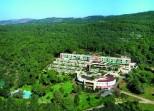 Carmel-forest
